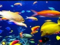 Gioco Pesce Spot the Difference on-line - giochi online